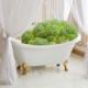 BroccoliBath