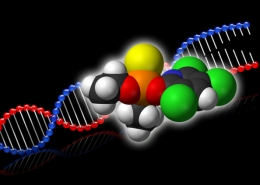 Chlorpyrifos and DNA