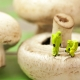 Chlorpyrifos and Mushrooms